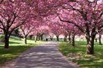 bugs_cherry_blossom_festival_2