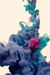 BUGS_A duo colori arte fotografia 09