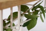 bugs_Plantable_5